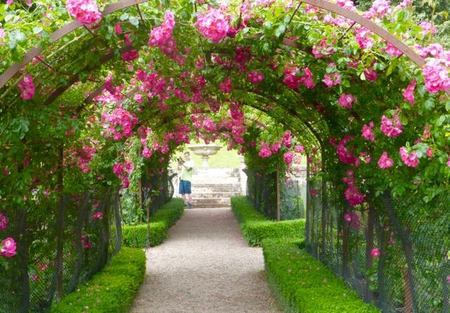 Rose arch in Tyntesfield