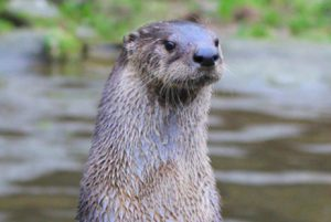 Visit to Buckfastleigh Butterfly House and Otter Sanctuary @ Buckfastleigh Butterflies and Otters