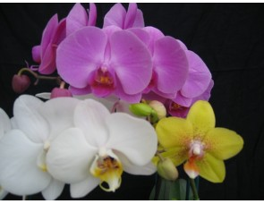 Visit to Orchid Paradise @ Orchid Paradise, Burnham Nurseries